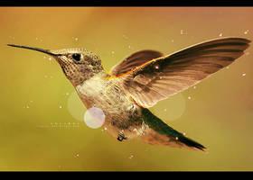 Colibri minimalist by R-azzor