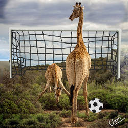 Tall Football
