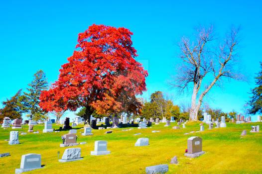 Fall Cemetery