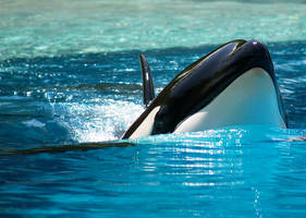 Orca. by purevintage