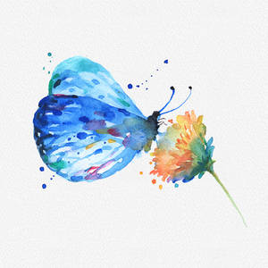 Butterfly And Flower Watercolor Clipart PNG