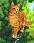 Squirrelflight
