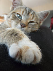 You may kiss my paw!