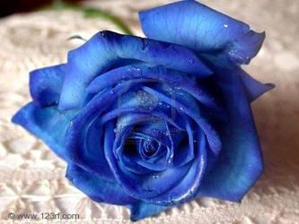 Blue Rose Big Version by blueroseplz