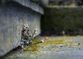 Flower on Stairs