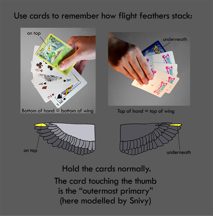 Cards by squidlifecrisis
