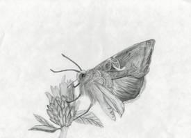 Gamma moth