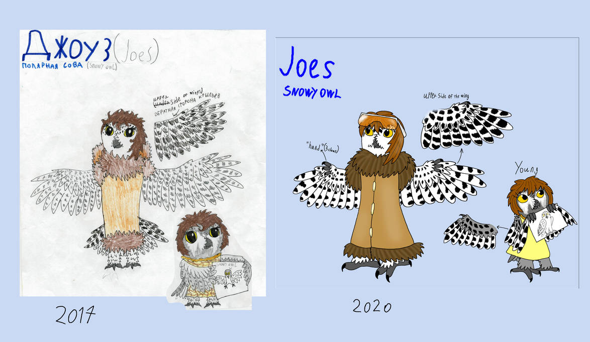 Draw this again: Joes the snowy owl