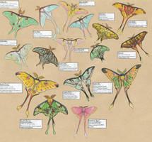A lot of lunar moths...
