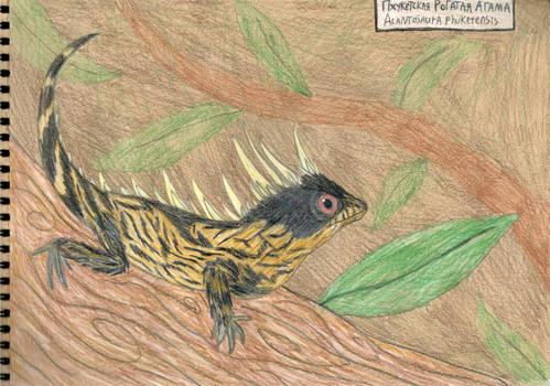 Discovered in 2019: Acantosaura Phuketensis