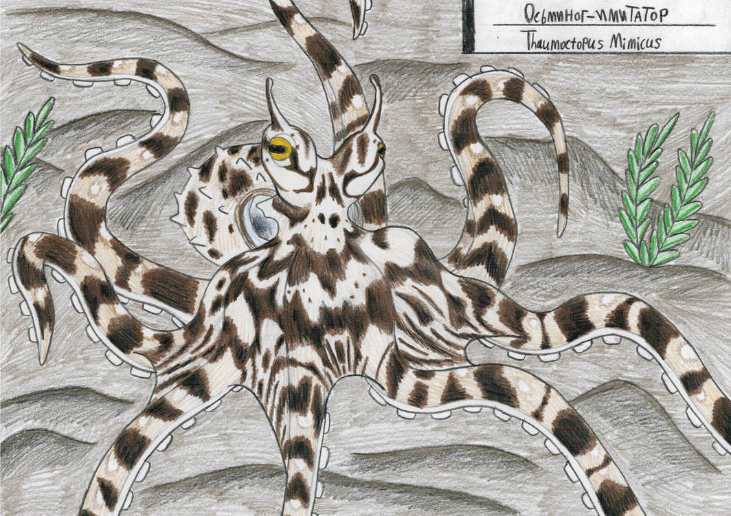 Octopus week: Mimic octopus