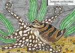 Octopus week: Pacific striped octopus by EyweenaPterus