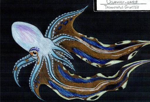 Octopus week: Blanket octopus (female)