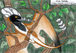Wing of Darwin by MarinaPterus