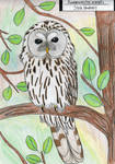 Ural owl by MarinaPterus