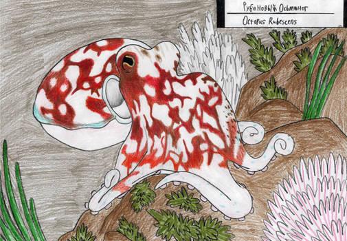 Ruby octopus