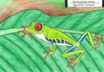 Red-eyed treefrog by EyweenaPterus