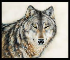 Wolf portrait by Reza-malinova