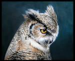 The Eurasian eagle-owl