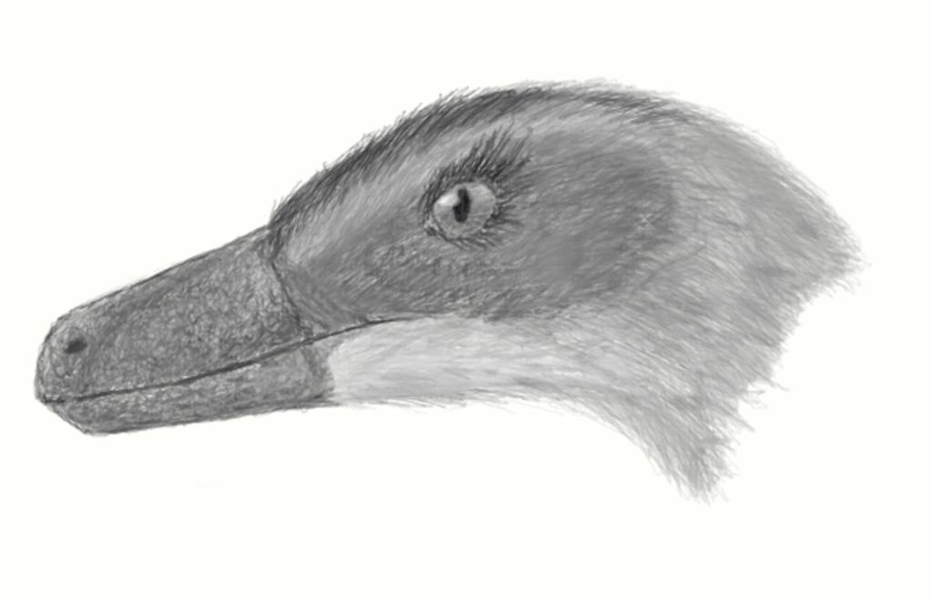 Velociraptor by casielles