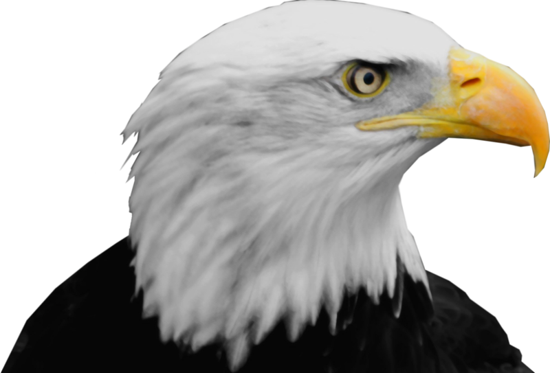 bald eagle render by -#main