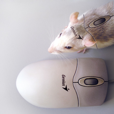 mouse by Limubay - Model Model Mouse �e�itleri