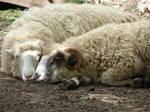 Sheep by Xyru
