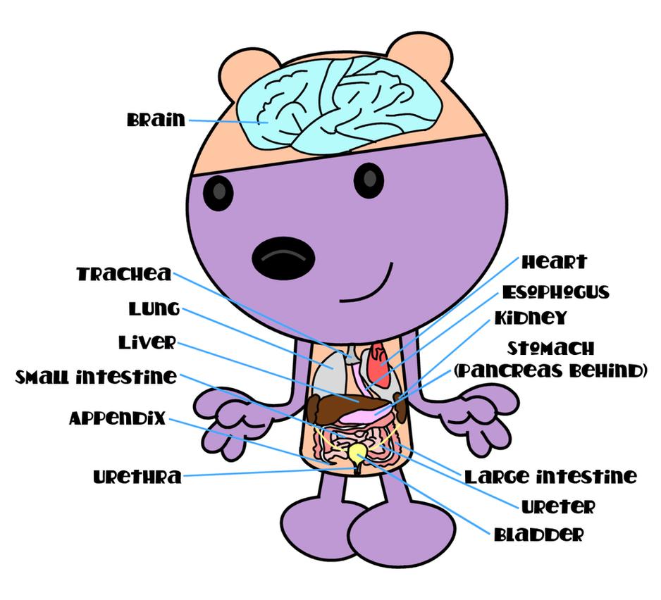 Walden anatomy chart by dev-catscratch on DeviantArt