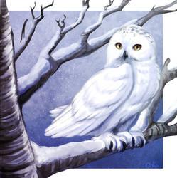Snowy Owl by 0okamiseishin