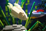 Tropical Aquarium ~ Gourami on the Move