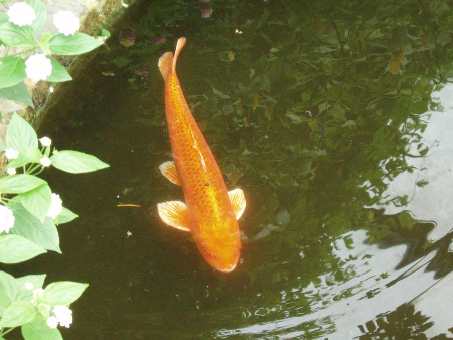 Orange carp by jadebadger on deviantart for Carpe koi orange