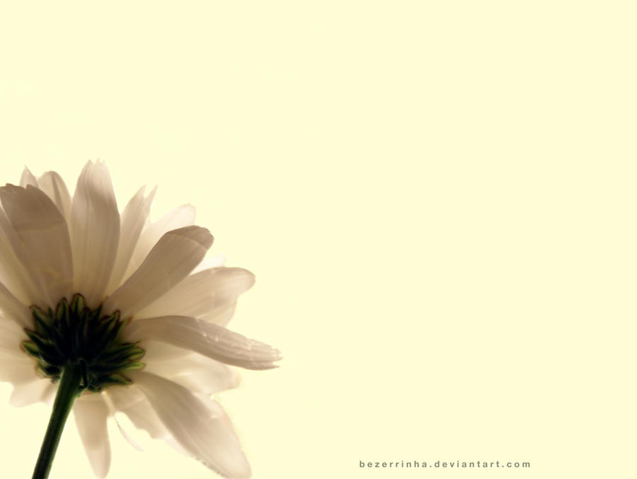Flor by bezerrinha