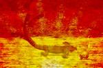 CAT-GUANA - 039 by LazyBonesStudios