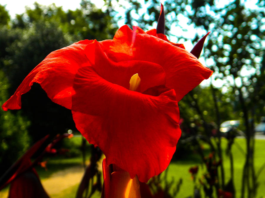 Really pretty red flower by thishumanbeing on deviantart really pretty red flower by thishumanbeing mightylinksfo