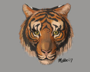 10-5-17 Tiger heads with Aaron Blaise by Bimisi