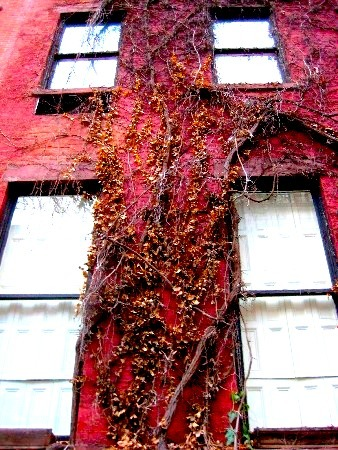Red Vine by Radical-Doubt