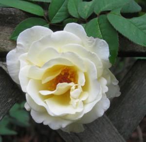 Rosebud-Inc's Profile Picture