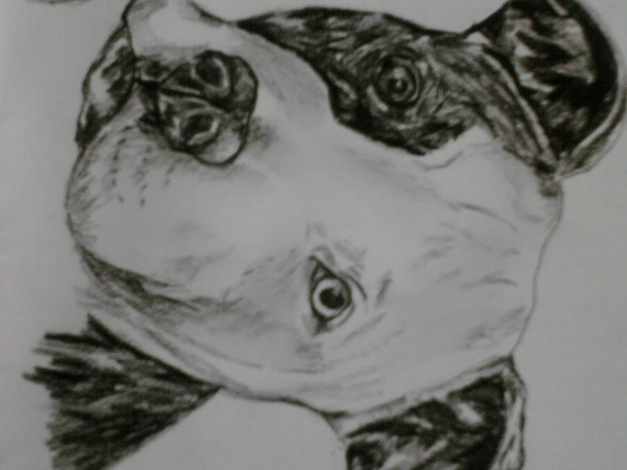 pitbull puppy portrait by ~sugarskull-tattoos on deviantART