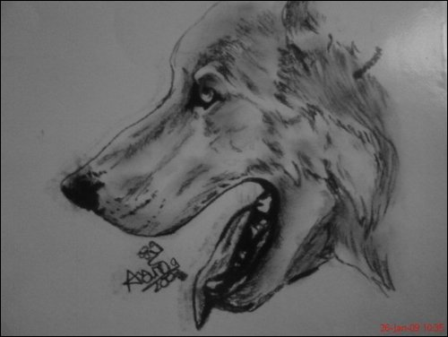 profile wolf drawing by sugarskull-tattoos