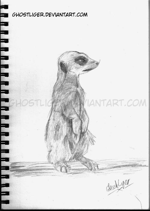 Meerkat by GhostLiger