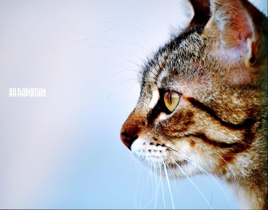 The Aquaelïs Queen © Workshop - Page 6 Wild_cat_by_krdmn-d4hn0uj