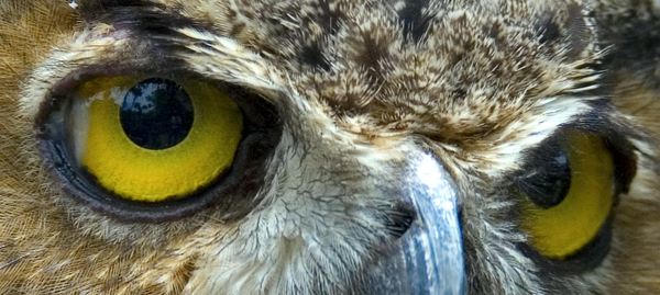 100 Percent Owl Crop by hoboinaschoolbus