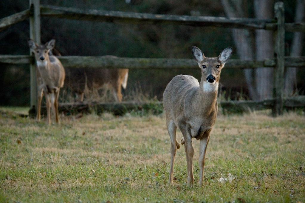 New Year Deer by hoboinaschoolbus