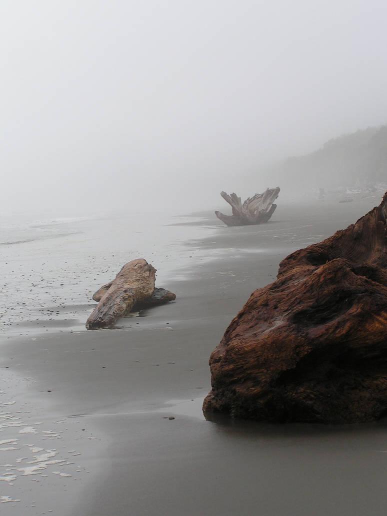 Washington Coast 5