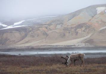 Arctic Tundra 2 by FeloniousMonk254