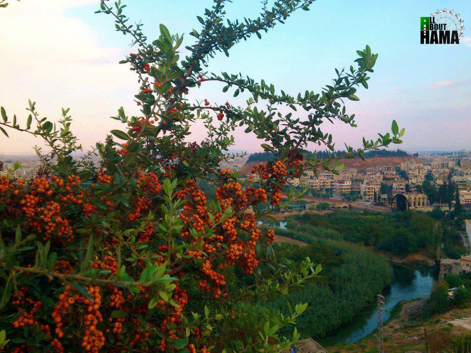 syria_hama__by_allabouthama-d5rl3n2.jpg
