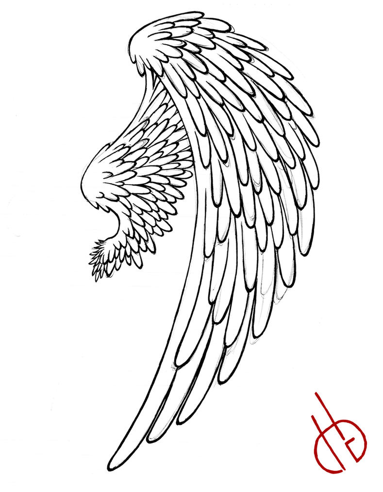 Line Drawing Wings : Bird wing by di gon on deviantart