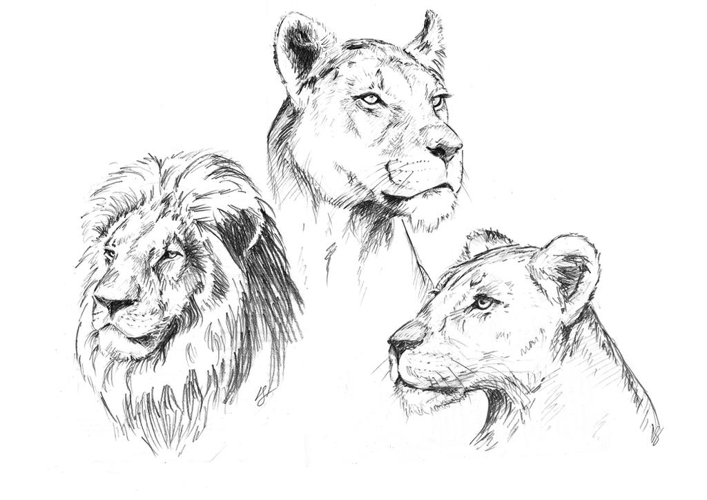 Lions by louisesaunders