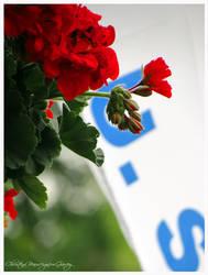 Red Flower and Flag by GarvsGirl