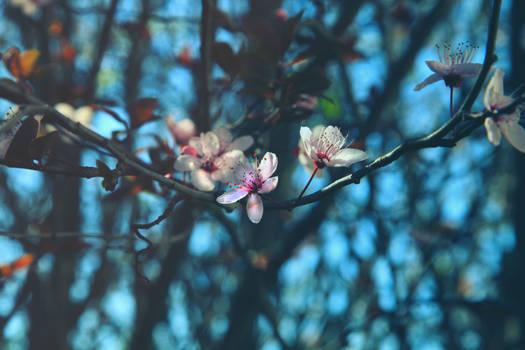 La primavera e ritornata